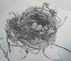 tweed_anne_resting